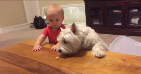 これぞ友情!犬が餌を取ろうとすると相棒がそっと手を差し伸べるほっこり動画