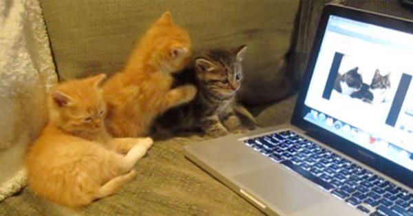子猫 会話