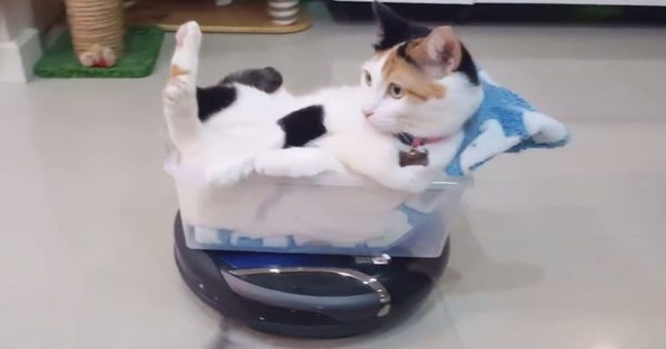 猫、ルンバで移動「リラックス中だニャ」