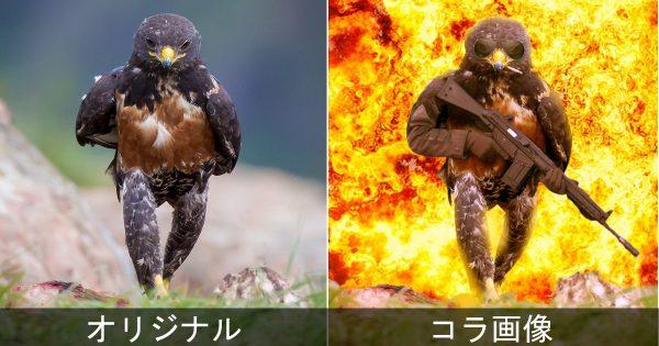鷹のカッコいい写真、コラ職人が悪ふざけで加工してみたら意外とイケた18選