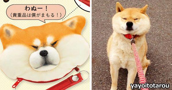 この表情がヤバい!「散歩に行きたくない柴犬」が商品化され犬好き悶絶