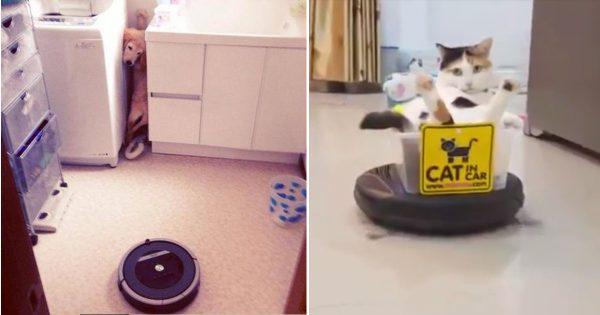 我が家にやってきたロボット! ルンバ VS ペットたちの攻防戦10選