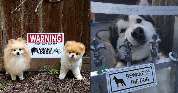 見掛け倒しかいっ! 「猛犬注意!!」の看板の先にいたもの 12選