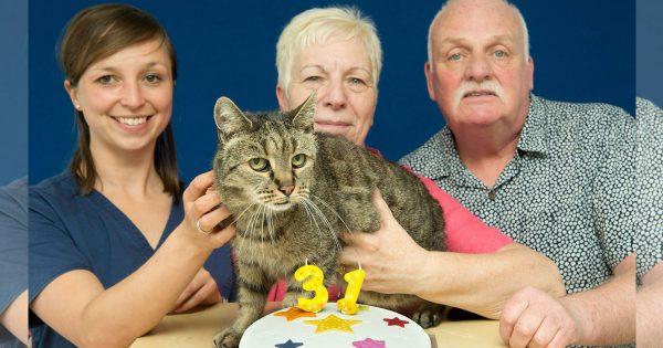 【人間だと御年141歳!】 推定年齢31歳の超ご長寿ニャンコが見つかる
