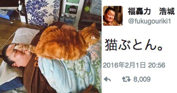 力士と猫と時々マカロン♡「女子力高すぎなお相撲さん」の日常が可愛いくてほっこり