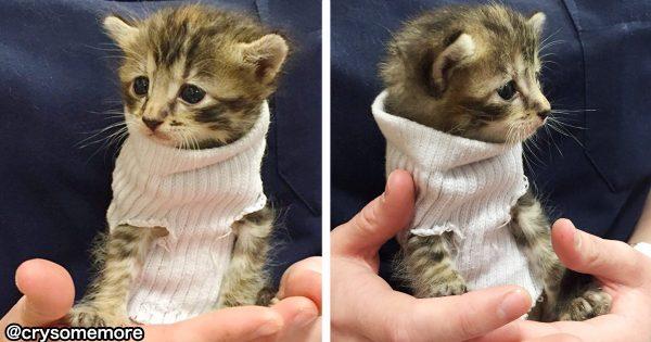 けしからん可愛さだ!ハリケーンから救出された「靴下を着る子猫」に世界中が癒される
