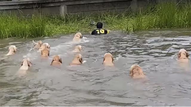 犬 水泳2