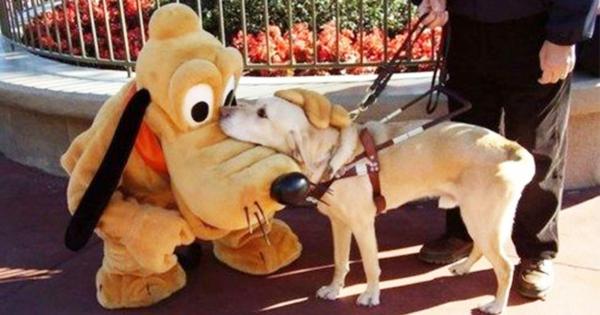 愛されすぎでしょ!(笑) プルートが犬たちからやたら人気な件について(画像8枚)