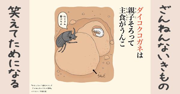 【ざんねんないきもの】ダイコクコガネは親子そろって主食がうんこ