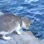 「見とけよ、これが魚獲りや!!」一瞬で魚を仕留める猫さんがかっこ良すぎるww
