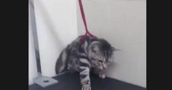 この子は天才かもしれない…診察台から脱出するネコに思わず笑う!!