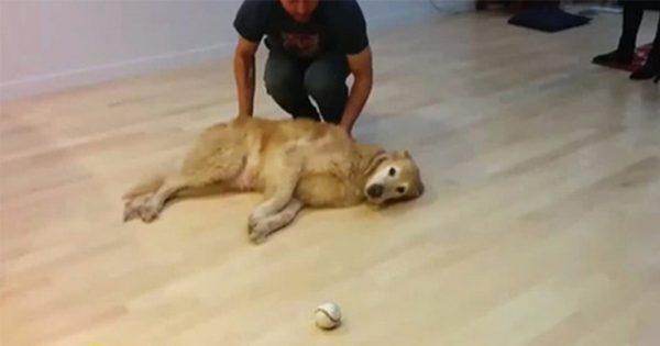 今まで見た中で一番怠け者のボール遊び『キャッチボール』