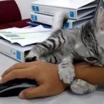 子猫が腕に必死にしがみつく…振り払うもダメ…結果、パソコンできず