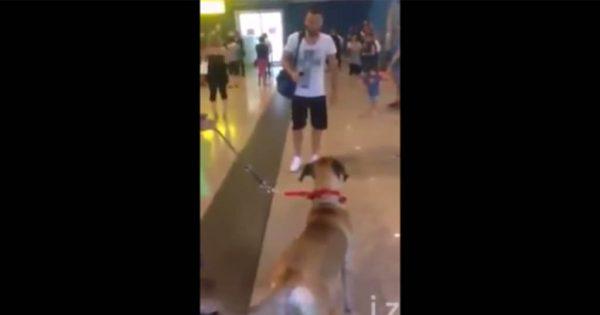 【周りを気にせず】3年ぶりにご主人と再会した犬、喜びが爆発して泣きじゃくる!!