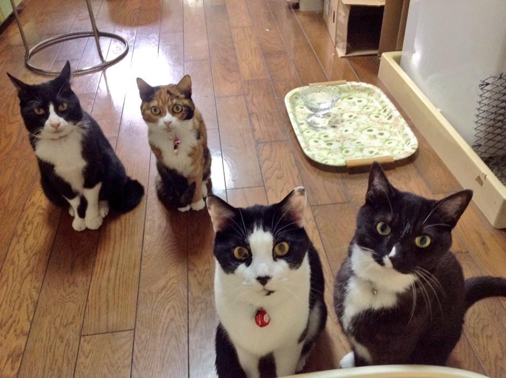 お前はジャイアンか! 食事中、隣の猫にアッパーをくらわす猫が理不尽すぎる