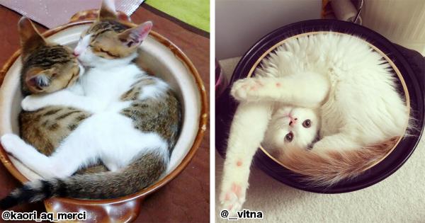 今年の冬のイチオシ鍋。2016年も「猫鍋」の季節がやってきました(画像22枚)