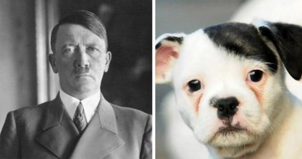 【生まれ変わってる説濃厚】ヒトラーにしか見えないもの17選
