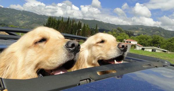 【意地でも風あびたい】犬が最も生き生きするのは「ドライブ中」である15選