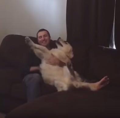 犬 倒れる6