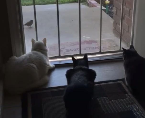 猫 待ち伏せ
