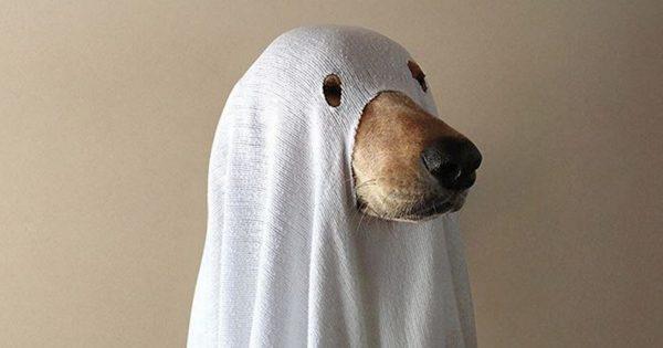 全然怖くない!愛犬と一緒にハロウィンを楽しみたくなる「ゴーストドッグ」が可愛い