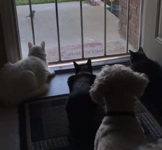 猫 待ち伏せ2