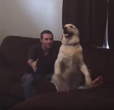 犬 倒れる5