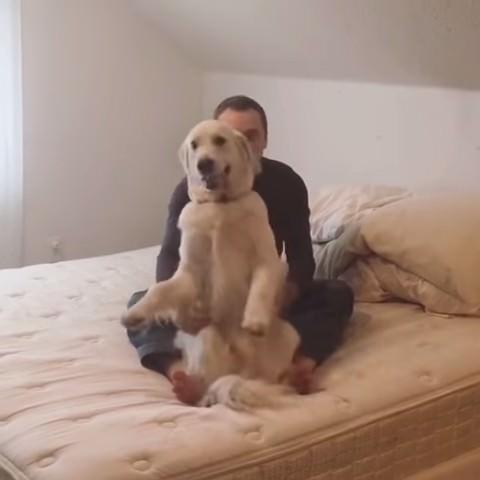 犬 倒れる2