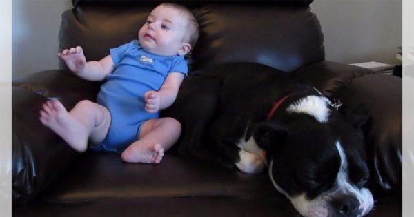 赤ちゃんのオナラ攻撃!ワンコはうたた寝の夢からさめて、緊急避難!笑