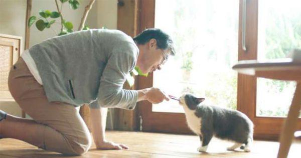 それでも愛したい!なかなか心を開かない猫とお父さんの物語に心が温まる