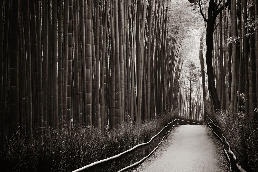 白黒写真をワンクリックでカラー化!早稲田大学の助教授が開発した神サービスが楽しい