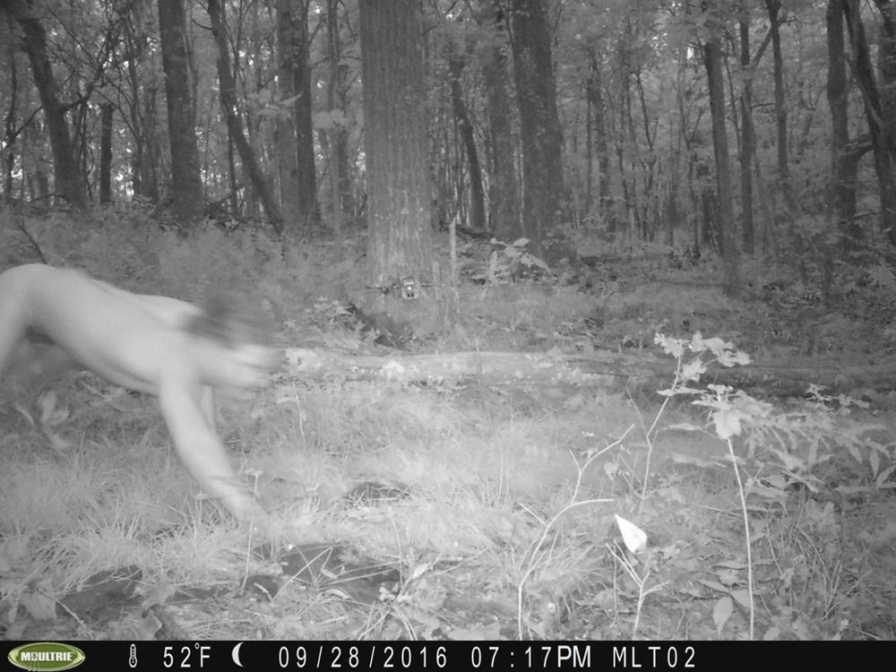 動物を撮りたかった・・・ 森にカメラを設置したら何故か「野生の全裸男」をキャッチ
