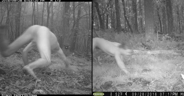 動物を撮りたかった・・・ 森にカメラを設置したら何故か「野生のオッサン」をキャッチ