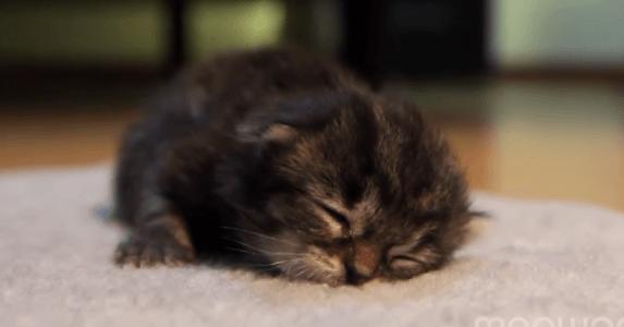 子猫 寝落ち3