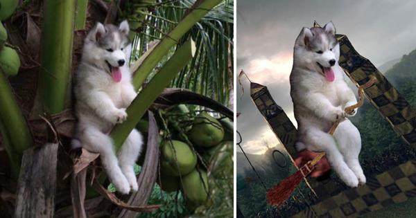 【どうしてそこに座った】犬のおもしろ画像が大喜利大会に発展 → めちゃ笑える