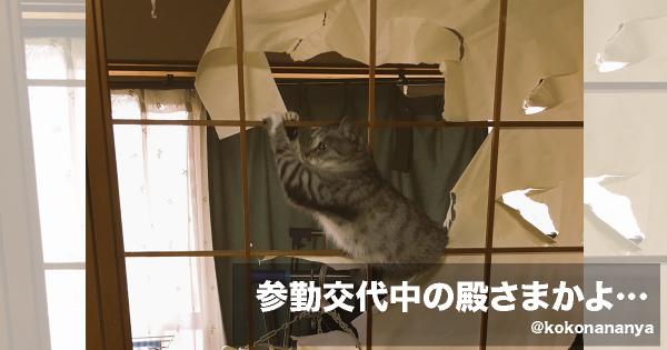 もう好きにして(笑) 猫と障子の組み合わせは笑いの宝庫である7選
