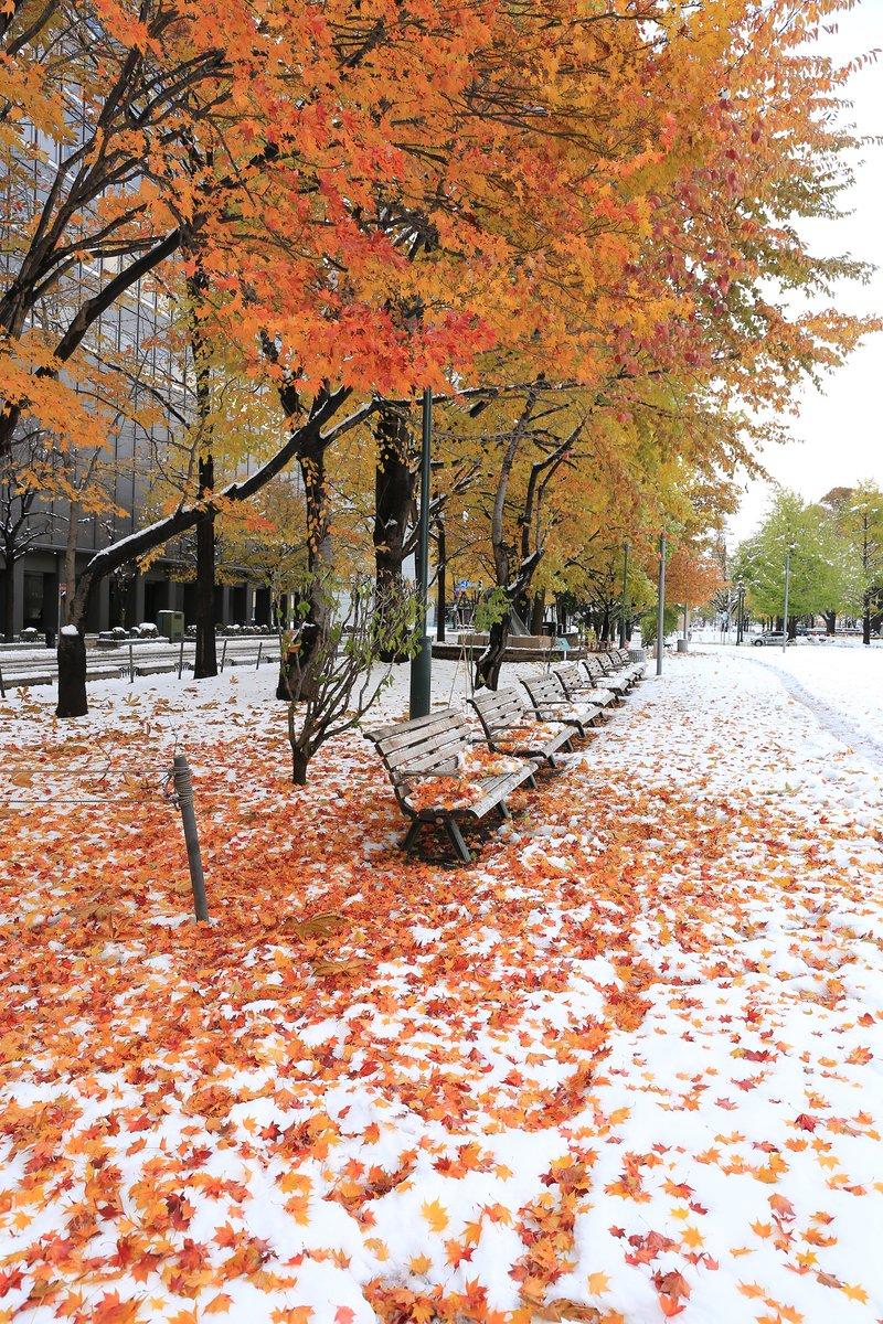 赤と白のコントラストが美しい! 北海道で雪が降り、紅葉とコラボする珍しい景色に