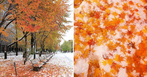 赤と白のコントラストが美しい! 北海道で積雪、紅葉と雪がコラボする奇跡の景色に