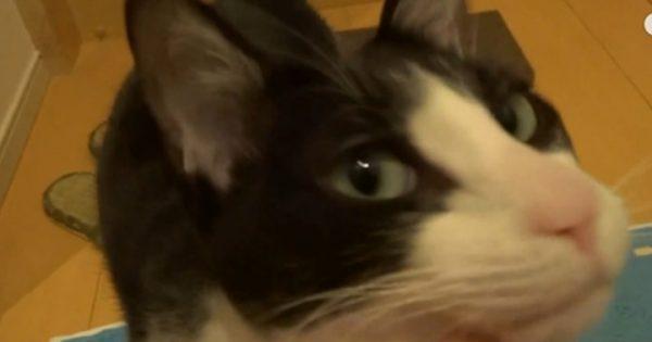 猫まっしぐら(笑)3日ぶりの飼い主さんのお出迎えに喜びを爆発させるにゃんこ