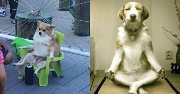 【まーた相撲中継見てる】  ウチの犬は、おじいちゃんの生まれ変わりに違いない 10選