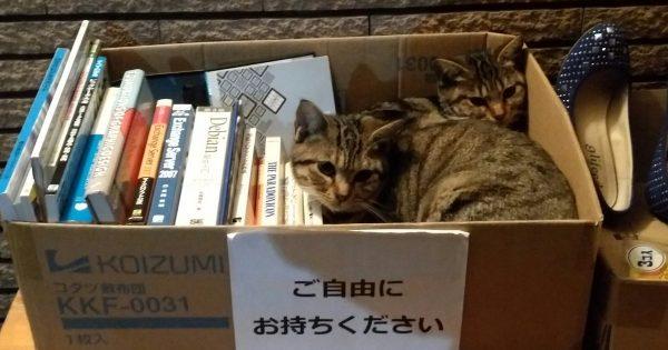 【お猫様は高待遇】 猫好きしかいない世界9選