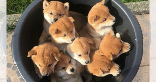 モフモフ天国いただきます!子犬のバケツ盛り合わせ10選
