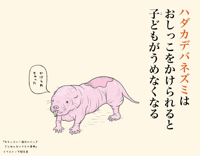 p163 ハダカデバネズミ