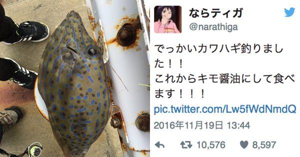 猛毒の魚を勘違い・・・「ダメ!」食べる直前に見たTwitterで命拾い!