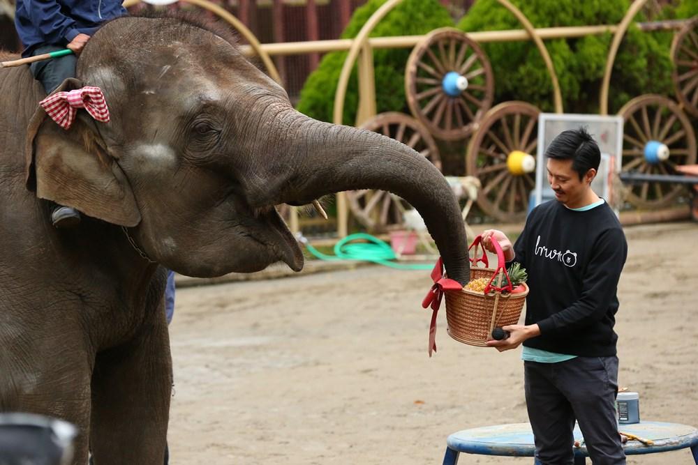 妊活費用は自分で稼ぐ! アジアゾウのゆめ花、LINEスタンプを自分で描いて販売