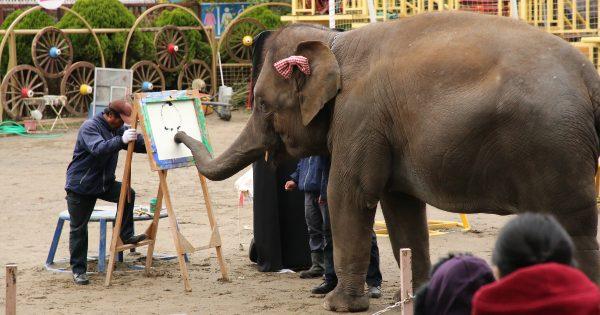 妊活費用は自分で稼ぐ! LINEスタンプを描くアジアゾウの「ゆめ花」を応援したい