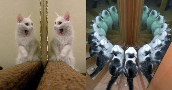 【誰だお前はーー!!】 鏡を見た猫のリアクションが何とも言えない面白さ 13選