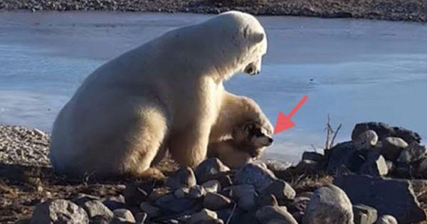 肉食のシロクマが犬をナデナデしてかわいがる「ちょっとドキっ」とする珍映像が話題