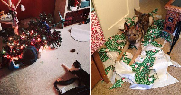 全国のご主人あと一ヶ月です。ペットと過ごすクリスマスは油断禁物だとわかる12の画像