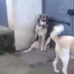 やっぱり母は強かった!子犬を驚かせてしまったパパ犬にまさかの悲劇